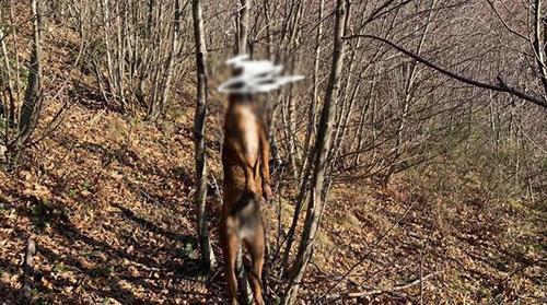 Cane impiccato ad Agerola, l'associazione animalista mette una taglia di 2mila euro sulla cattura del responsabile
