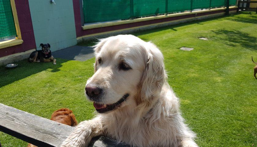 Toelettatura per i cani, la Regione dice sì ma osservando le misure