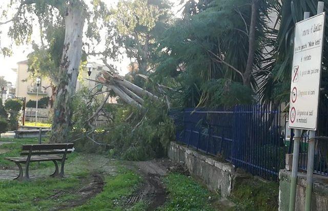 """Bellizzi, tragedia sfiorata per la caduta di un albero. Il consigliere Maddalo: """"Amministrazione superficiale"""""""