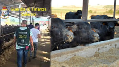 Scarichi nel fiume Calore ed lavoratore in nero: sigilli ad azienda di Albanella