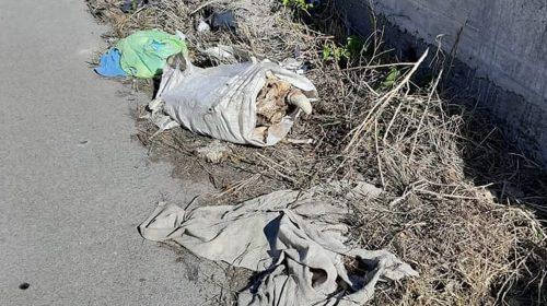 Nocera, choc in via Starza: testa di mucca tra i rifiuti