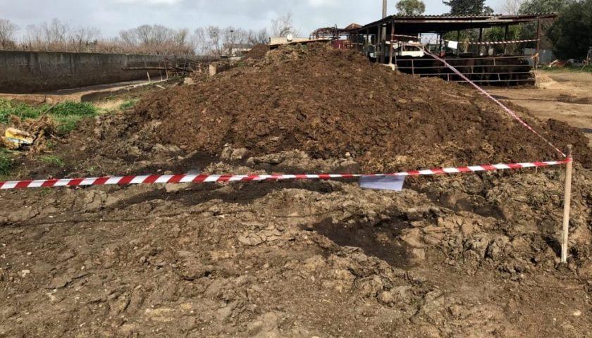 Sversamenti illeciti: sequestrata un'azienda bufalina ad Altavilla, titolare indagato
