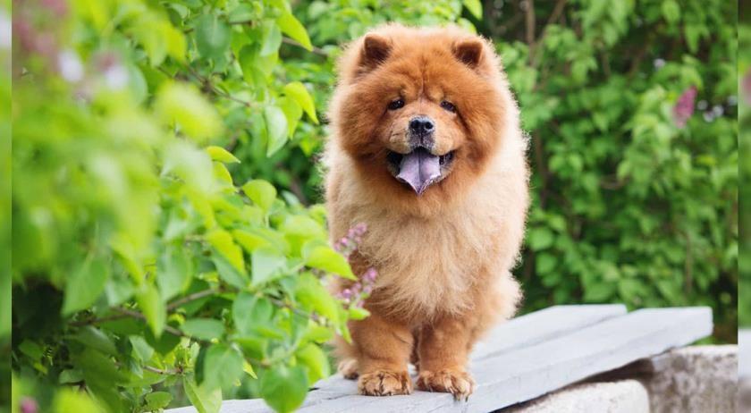 Vendita-truffa dei cani di razza a Sarno, altra inchiesta dopo il caso Lautaro
