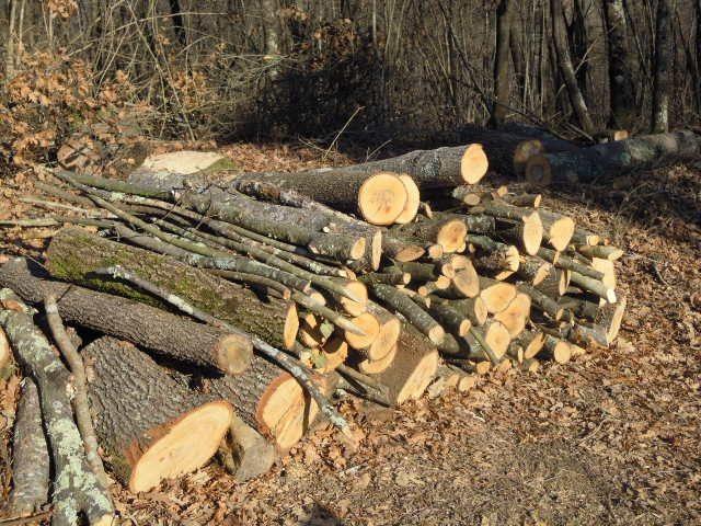Taglio abusivo di legna a Montecorvino Rovella, blitz dei vigili urbani: sequestrati 100 quintali