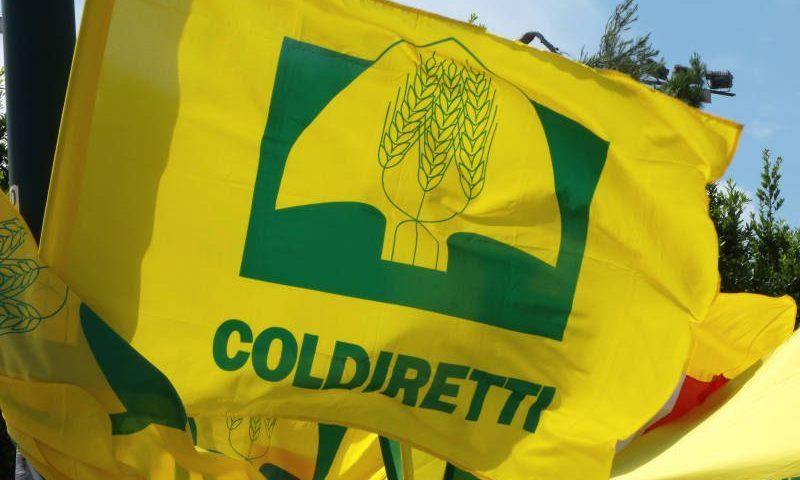 Covid: agricoltura salernitana in affanno, in crisi anche il florovivaismo