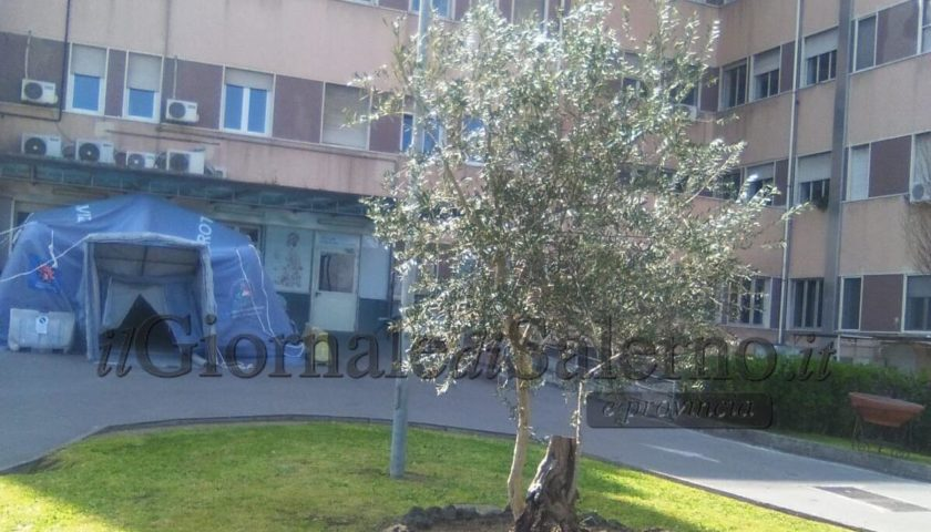 """Pagani. Gli """"Angeli"""" donano un ulivo all'Ospedale Andrea Tortora"""