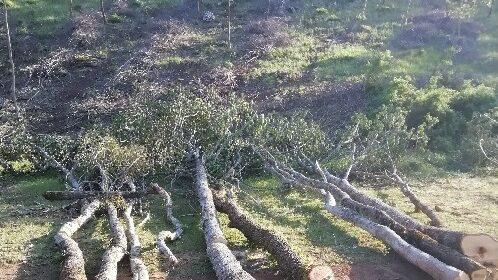 Taglio abusivo di bosco a Montesano sulla Marcellana, ditta boschiva nei guai
