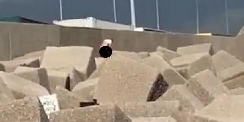 Sesso tra gli scogli della spiaggia libera di Salerno, coppia filmata e video postato sui social