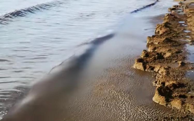 Ancora melma nera sulla spiaggia di Santa Teresa, foto inviate al Comune