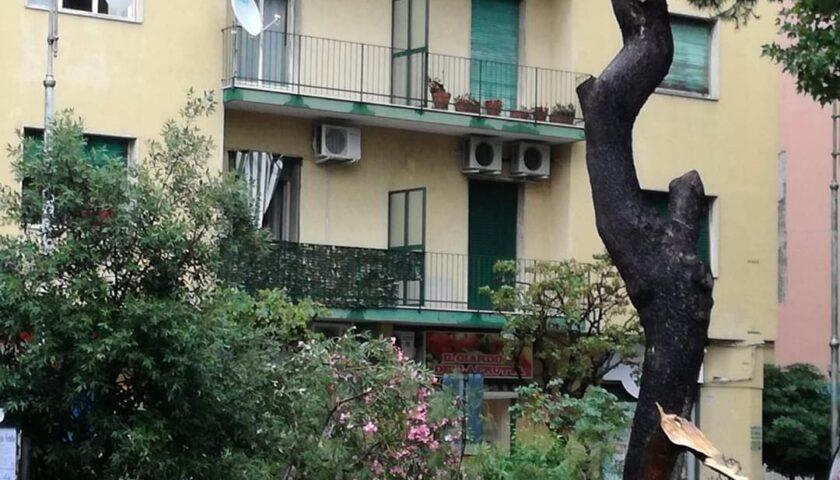 Il vento abbatte un albero a Torrione, tragedia sfiorata