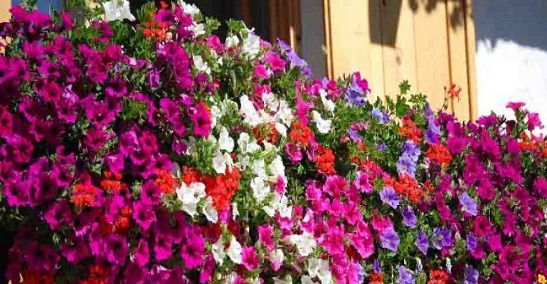 """Dal 19 al 21 giugno ci sarà """"Cava Fiorita – aiuole e balconi in fiore"""""""