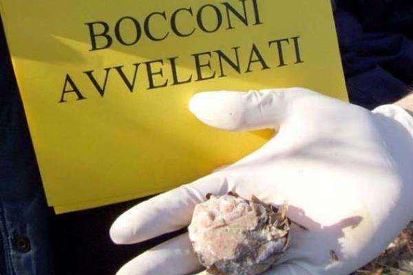 Bocconi avvelenati per cani a Futani e Laurito, ordinanza dei sindaci a difesa degli animali