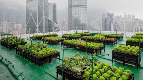 Urban Farming: il futuro bio delle città