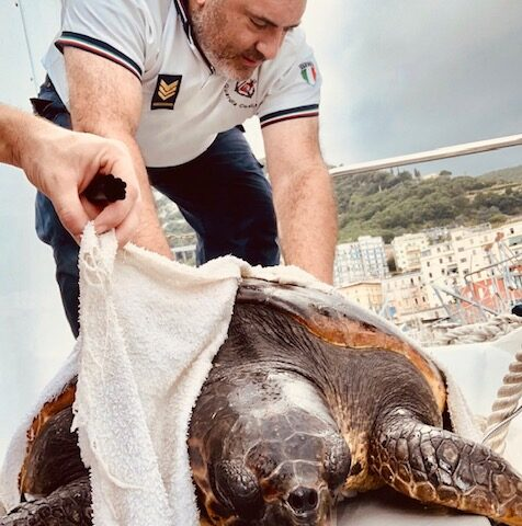 Tartaruga caretta caretta salvata dalla Guardia Costiera di Salerno