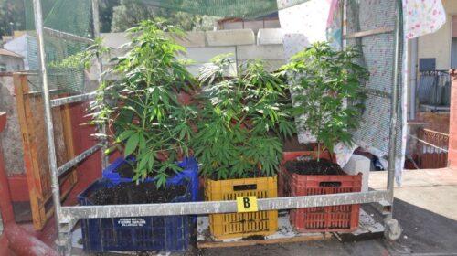 Cava de' Tirreni, nei guai impiegato con l'hobby della coltivazione di droga