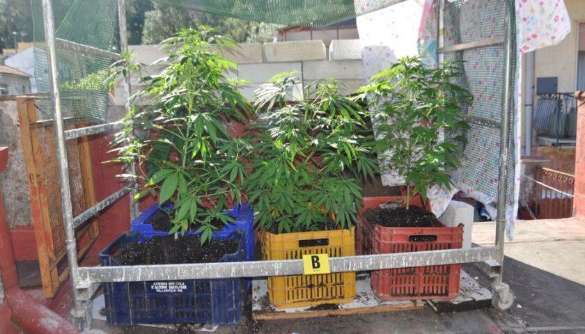 Piante di cannabis nel sottotetto, nei guai a Pregiato Vecchia un 39enne cavese