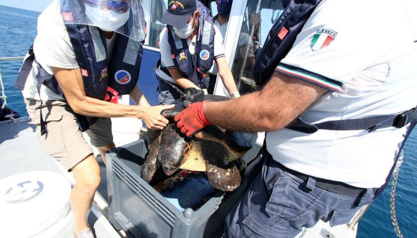 La Guardia Costiera rilascia in mare un esemplare di Caretta Caretta trovata a Pontecagnano