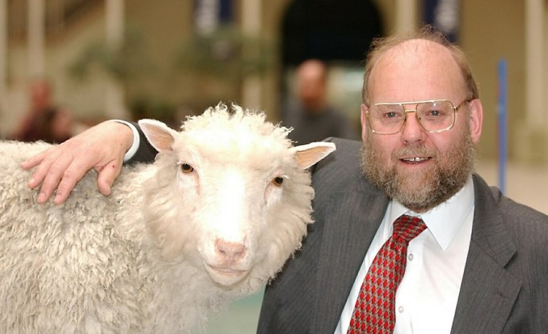 Accadde oggi: il 5 luglio 1996 nasce la pecora Dolly,  primo mammifero ad essere clonato