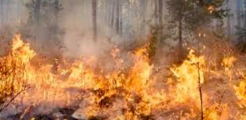 Sindaco di Fisciano emana un'ordinanza che vieta la bruciatura di vegetali e materiali agricoli