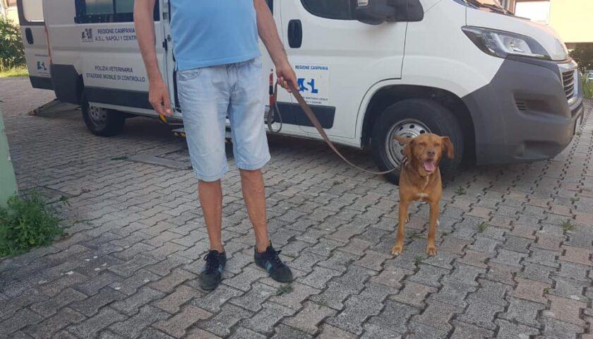 Pellezzano – sabato scorso si è tenuto il terzo ed ultimo appuntamento per la microchippatura dei cani