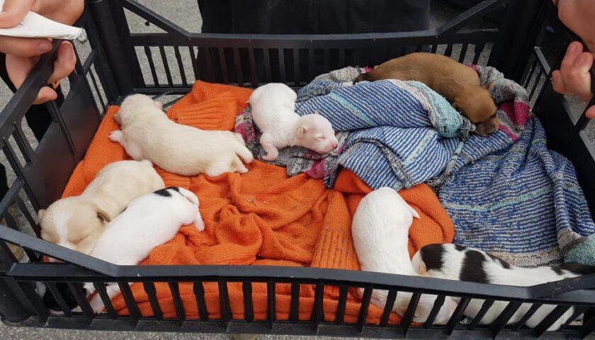 Grande successo a Pellezzano per la seconda giornata della microchippatura di cani