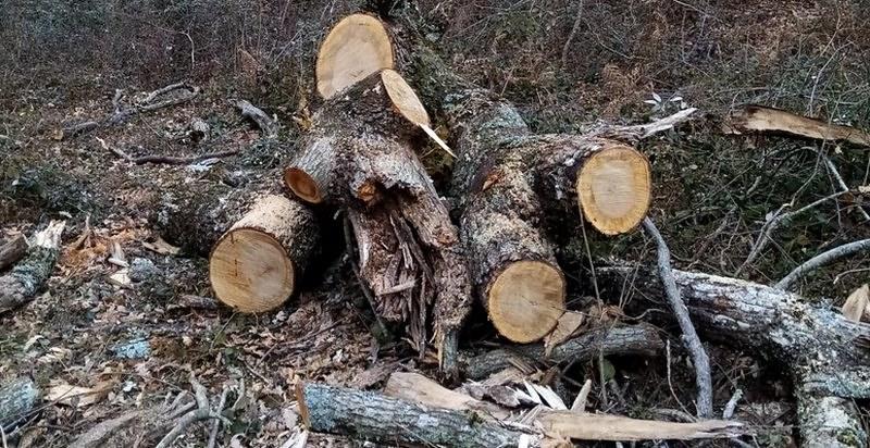 Ruba legna nei boschi, arrestato 28enne a Sanza