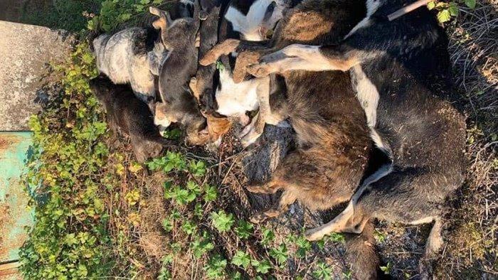 """Strage di cani a Sassano, la denuncia dell'Oipa: """"Una vergogna, 15 animali uccisi"""""""