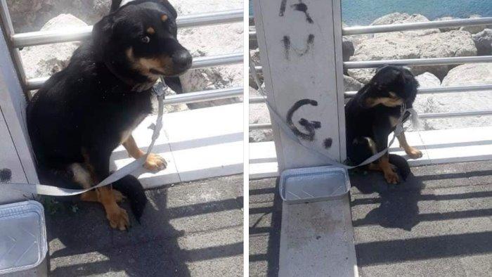 Inciviltà a Salerno: cane legato e abbandonato al Pennello sotto il sole