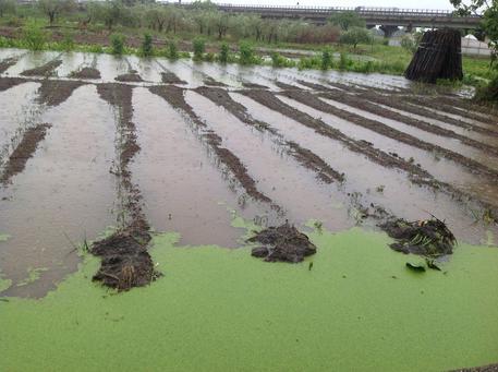 Maltempo, a Battipaglia danni all'agricoltura per un milione di euro