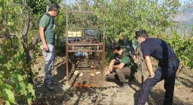 A Sarno gabbie per cinghiali nell'area protetta, caccia ai responsabili