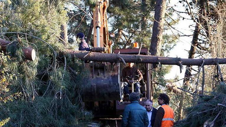 Bellizzi, albero sui fili dell'alta tensione: quartieri senza corrente