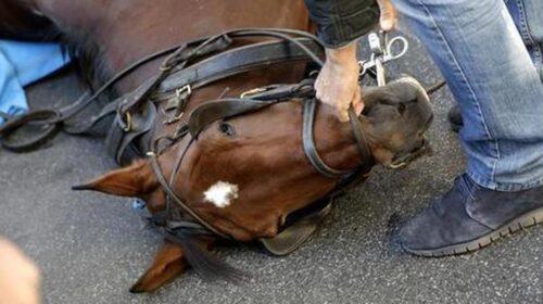 Automobilista investe cavallo a Mercato San Severino, l'animale si riprende e scatta la corsa al loro