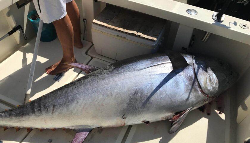 Pesca illegale del tonno rosso ad Agropoli: Legambiente chiede controlli
