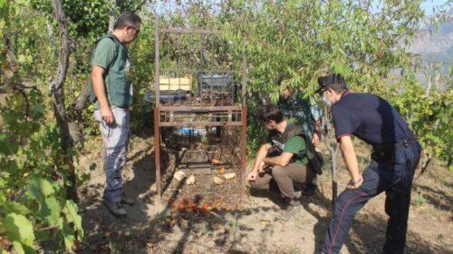 Gabbia trappola sotto sequestro a Sarno