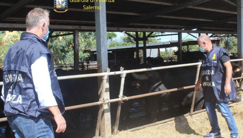 Sversamento rifiuti nei canali d'acqua: denunciato a Pontecagnano titolare di azienda bufalina