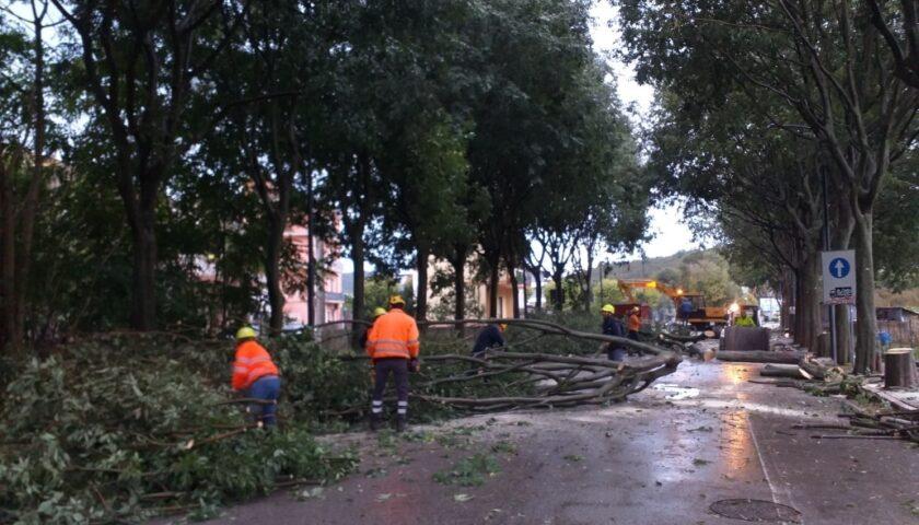 Baronissi – da oggi lavori in via Verdi, ieri invece abbattuti 64 alberi a via Verdi