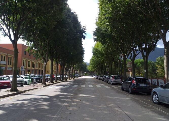 Baronissi, 64 alberi a rischio schianto: al via l'abbattimento