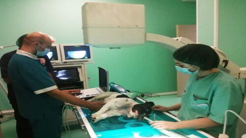 A Salerno eseguiti due delicati interventi di valvuloplastica polmonare su due cani