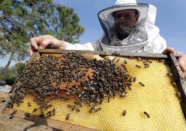 Greenpeace, è strage dei pesticidi con 8 mln di api morte