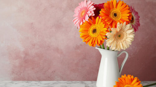 Voglia di aria sana in casa, cinque piante che purificano gli ambienti