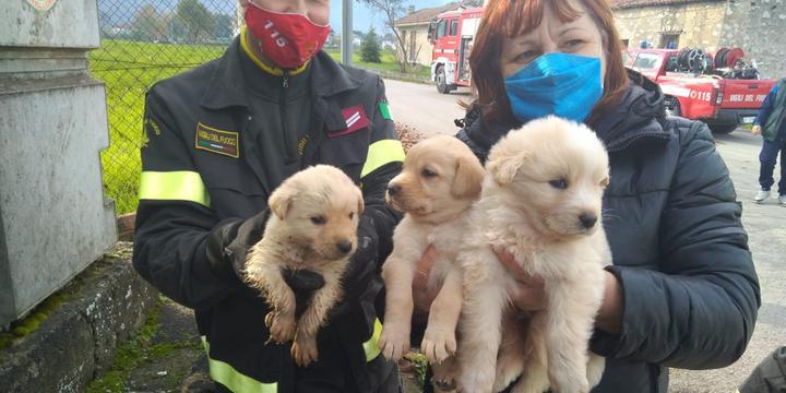 Teggiano, vigili del fuoco salvano cuccioli di cane finiti in una tubatura di un tombino