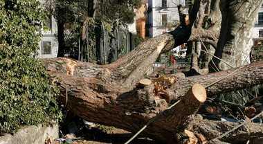 """Cava de' Tirreni, medico morto travolto da albero. La perizia: """"Gravi responsabilità, alberi da abbattere"""""""
