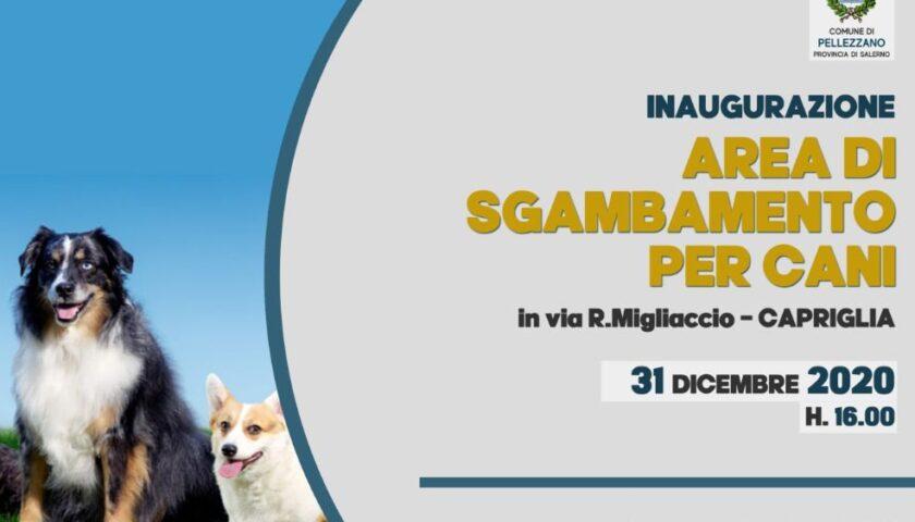 """NASCE LA PRIMA """"DOG AREA"""" NEL COMUNE DI PELLEZZANO"""