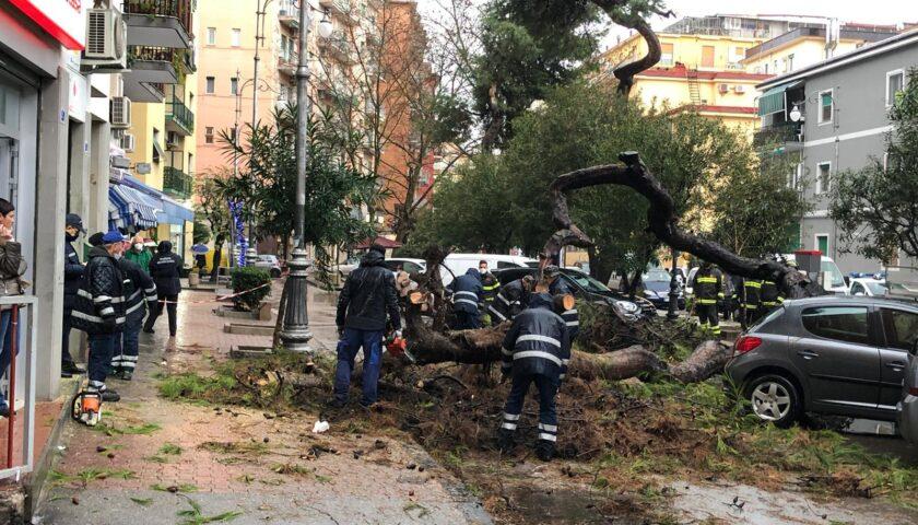 Salerno, albero scampato alla tromba d'aria di settembre si abbatte su un'auto a Torrione
