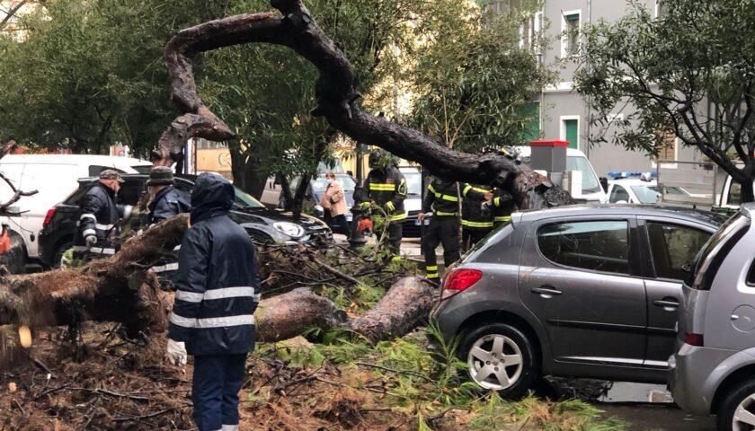Maltempo, albero abbattuto a Torrione: interrogazione di Roberto Celano