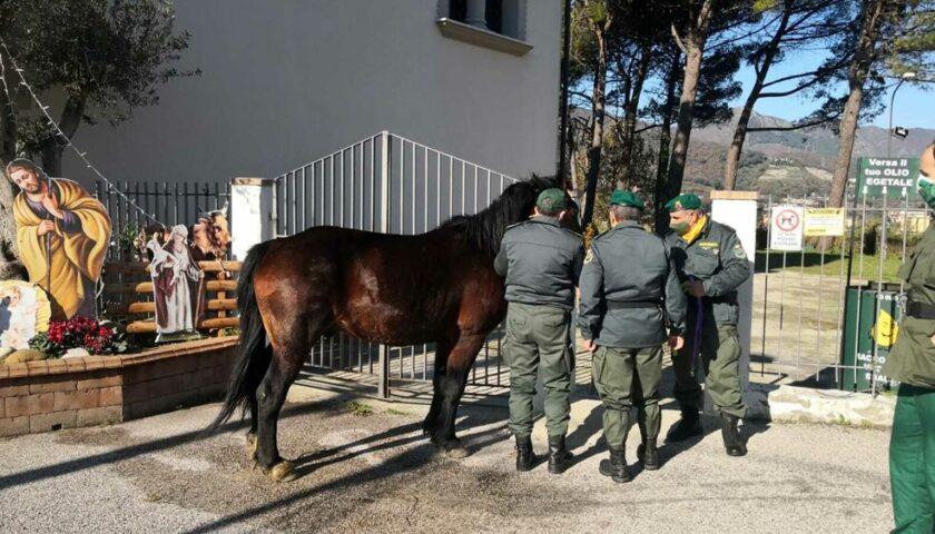 Salerno, l'Anpana salva cavallo nel territorio di Brignano
