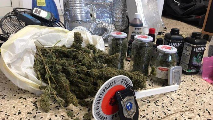 Battipaglia, serra in casa per coltivare droga: sequestro di mezzo chilo di droga