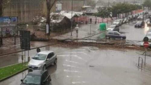 Il maltempo sferza la provincia, a Salerno cade un albero: Cammarota e il Codacons dal prefetto