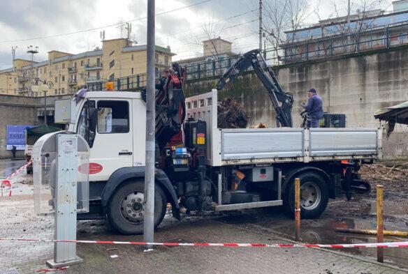 """Caduta albero a Salerno, il Codacons: """"La città sembra una foresta tropicale"""""""