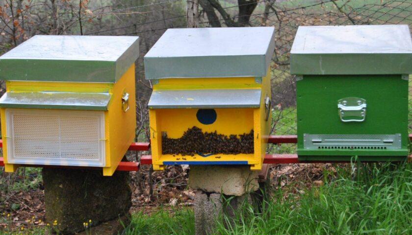 Furto d'api a Sicignano degli Alburni, ladri in fuga con 10 cassette per produrre miele